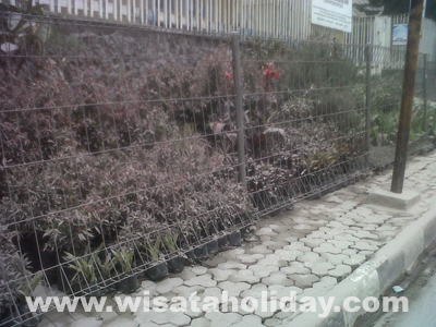 tanaman tertutup abu
